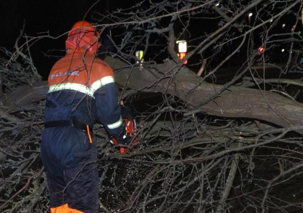 Et af de træer, som stormen Gorm væltede bliver her skåret op, så vejen bliver farbar igen. Foto: Morten Sundgaard - Skadestedsfotograf.dk.
