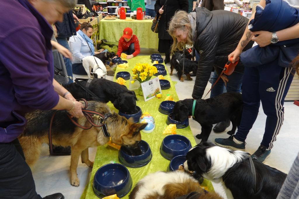 Maxi Zoo inviterer Holbæks hunde til påskefrokost. PRfoto.