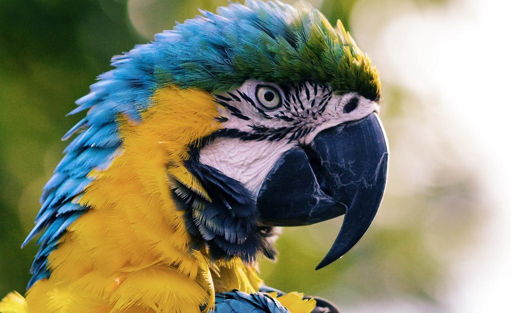Dette er IKKE papegøjen Anton, men et modelfoto. Foto: Unsplash.