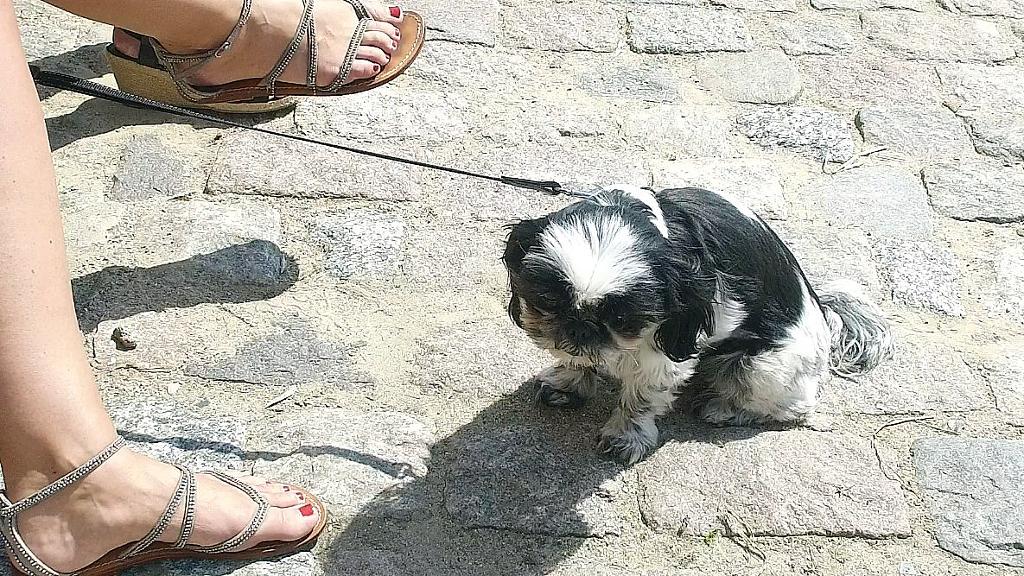 Nok var der fødevarefestival på Tuse Næs i sidste uge, men vi tror ikke denne lille hund var beregnet på at skulle  optræde  i rollen som Hot Dog. Foto: Jesper von Staffeldt.