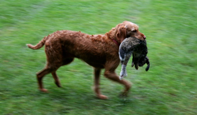 I weekenden er der familieweekend for jægere og jagtinteresserede med bl.a. hundeopvisning. PRfoto: Andelslandsbyen Nyvang.