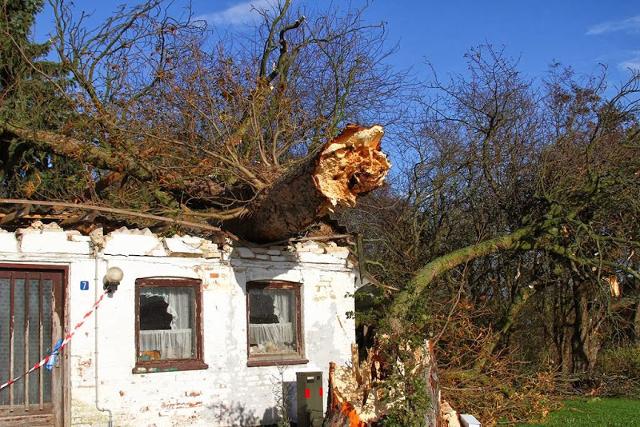 Et stort træ lagde sig ned over dette hus under stormen den 28. oktober i år. Så voldsomt forventes blæsevejret dog ikke at blive torsdag. Foto: Skadestedsfotograf.dk - Johnny D. Pedersen.